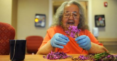 In this August 2014 file photo, Elder May Bernhardt picks fireweed blossoms off the stalks to make fireweed jelly at the Maniilaq Association elder care facility in Kotzebue. Food scarcity issues are more complex in rural Alaska, where traditional foods including wild fish, plants and game are a significant part of diets, says a new report on the subject from the Inuit Circumpolar Council Alaska. (Bob Hallinen / Alaska Dispatch News)