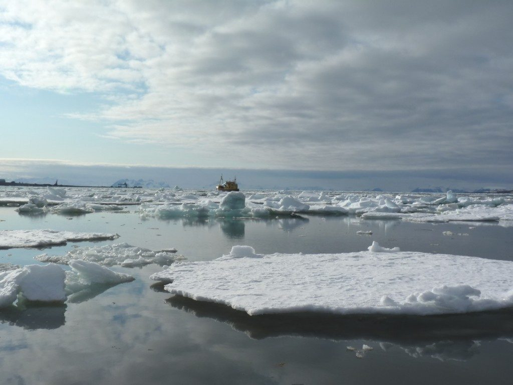 Melting ice, north and south? (Irene Quaile)