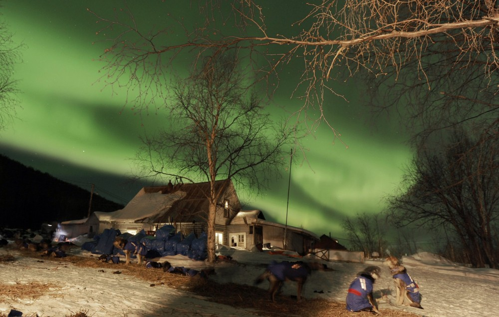 The aurora borealis, or northern lights, fill the sky above the Takotna, Alaska checkpoint as Karin Hendrickson's dogs rest during the Iditarod Trail Sled Dog Race on Wednesday, March 9, 2011. (Bob Hallinen/AP Photo/The Anchorage Daily News)