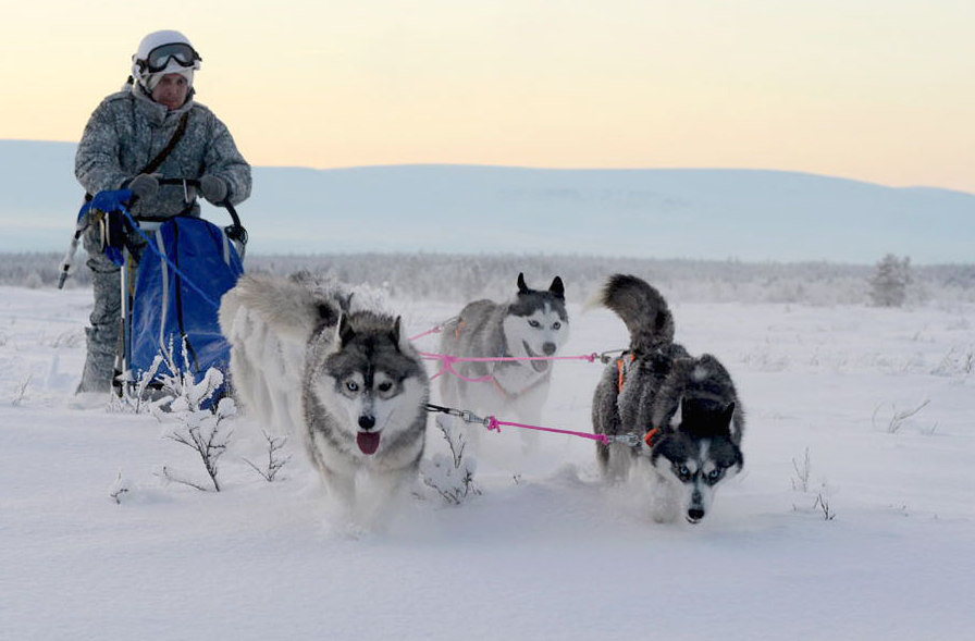 Russia's Arctic indigenous peoples advised the soldiers on taking care of dog teams and reindeer sleds says the Ministry of Defence. (Ministry of Defence)