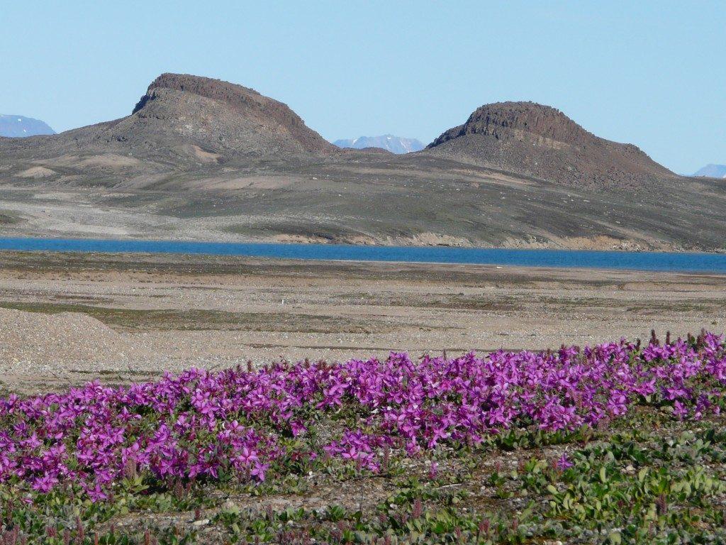 Greenland. Will the Arctic summer soon be longer? (Irene Quaile/ Deutsche Welle)