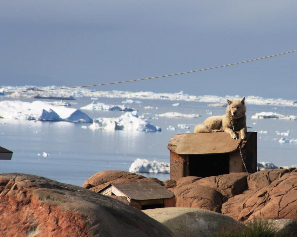 Longer enforced holidays for sled dogs? (Irene Quaile/Deutsche Welle)