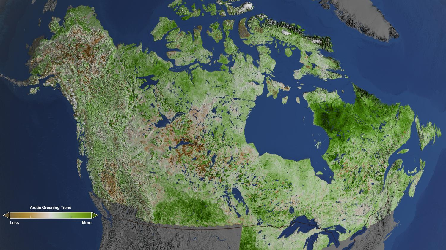 Using 29 years of data from Landsat satellites, researchers at NASA have found extensive greening in the vegetation across Alaska and Canada. Rapidly increasing temperatures in the Arctic have led to longer growing seasons and changing soils for the plants. Scientists have observed grassy tundras changing to scrublands, and shrub growing bigger and denser. From 1984–2012, extensive greening has occurred in the tundra of Western Alaska, the northern coast of Canada, and the tundra of Quebec and Labrador. (Cindy Starr / NASA's Goddard Space Flight Center)