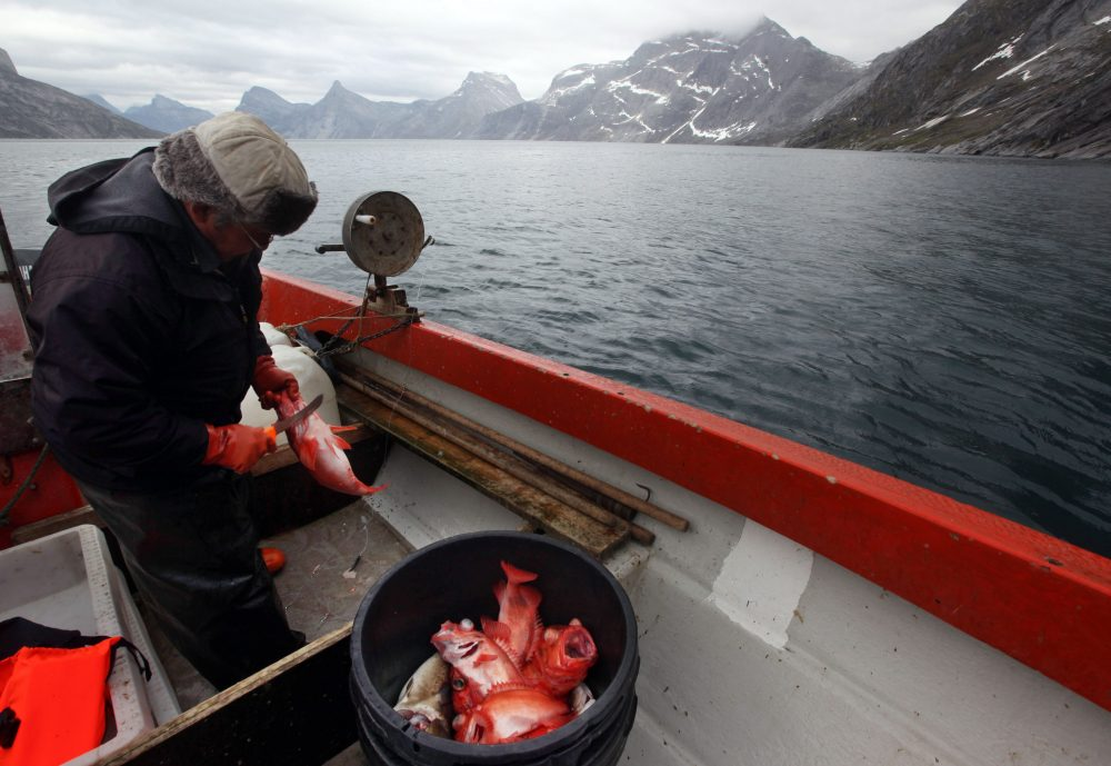 In this July 26, 2011 photo, an Inuit fisherman catches redfish along a fjord leading away from the edge of the Greenland ice sheet near Nuuk, Greenland. (Brennan Linsley/AP Photo)