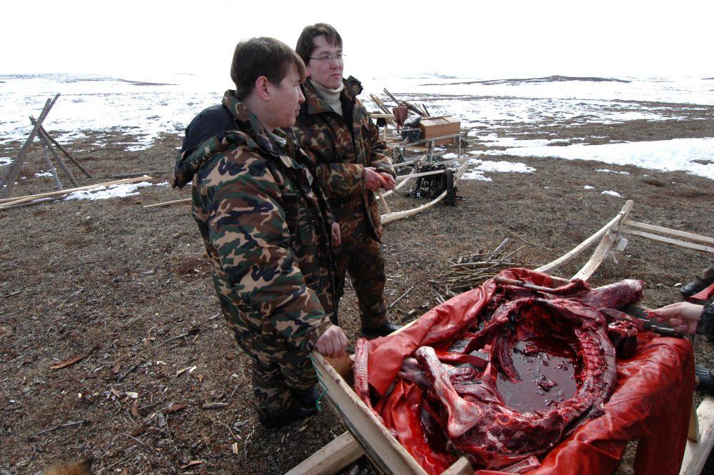 Slaughter time on the Nenets tundra. (Thomas Nilsen)