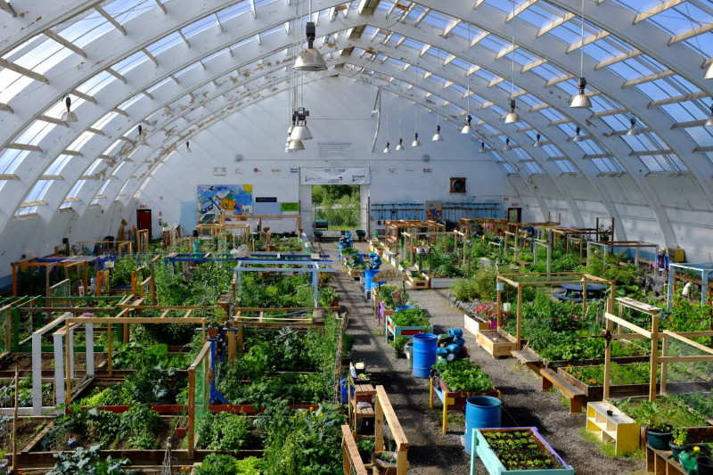 The enormous greenhouse inside the old hockey rink in Inuvik. (Mia Bennett)