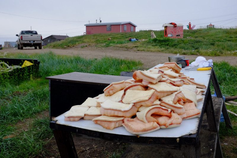 Muktuk – beluga whale skin and blubber – cut up before being boiled. (Mia Bennett)