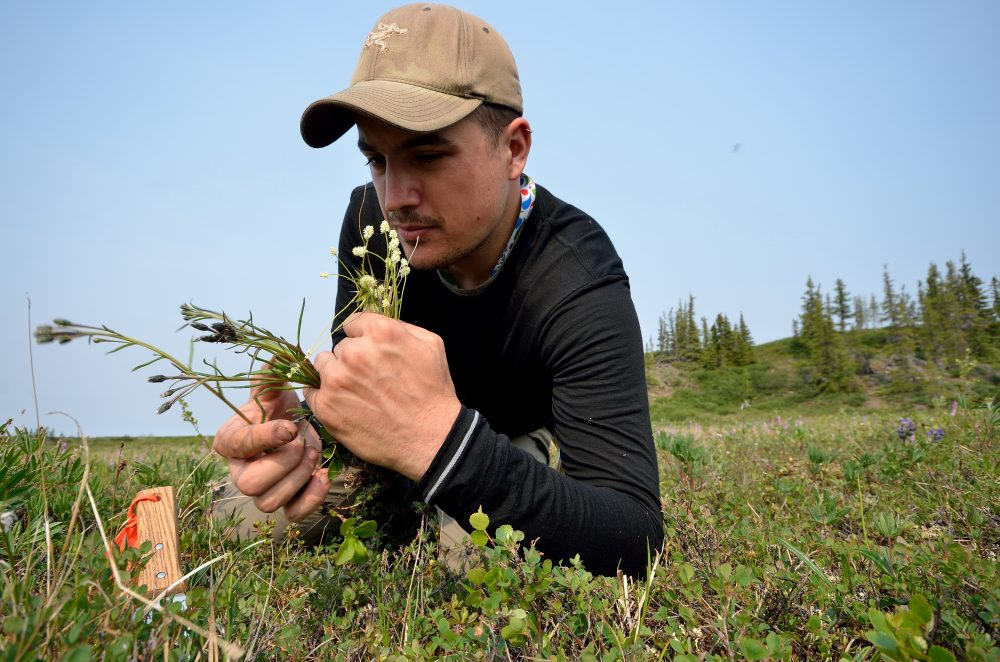 Botanist Paul Sokoloff collected plants in the Coppermine River region in the Northwest Territories in July 2014. (Canadian Museum of Nature).