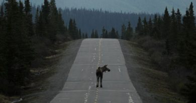 Someone is stealing roadkill moose from the side of Alaska highways