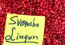 Gloomy lingonberry forecast for northern Sweden