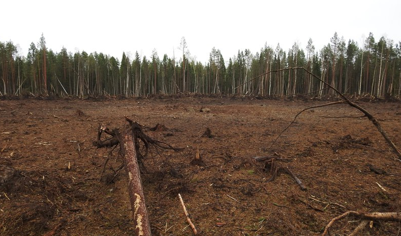 About one hectare of trees have been blown away at the site in the forest some 1.5 kilometres from the nearest village. (Photo courtesy of the Pinega municipality)