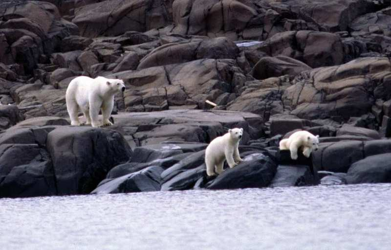 Russian researchers spent days trying to scare off the polar bears encroaching on their weather station before help came. File photo. (Thomas Nilsen/ The Independent Barents Observer)