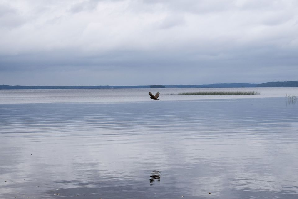 Nuasjärvi Lake is the end point for one of the mine's waste water pipelines. (Pasi Peiponen / Yle)