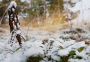 """Finland's Arctic Lapland region still awaiting first """"official"""" snow of the season"""
