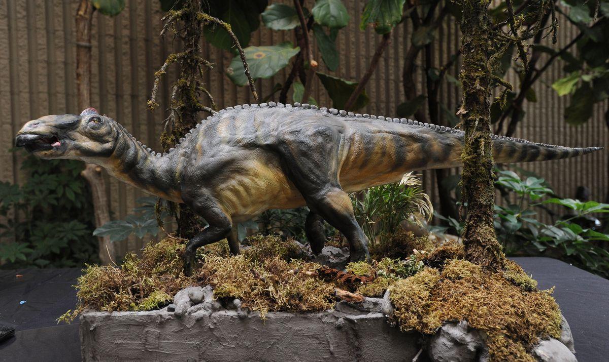 Artist James Havens made a model of an Alaska hadrosaur before he began a life-sized oil painting of the dinosaur inside the University Center on Monday, June 16, 2014. (Bill Roth / Alaska Dispatch News)