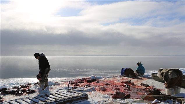 Isuaqtuq, Joannie and Perry Ikkidluak butchering bearded seal. (Alethea Arnaquq-Baril)