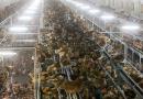 Sweden raises alert level after Danish bird flu outbreak