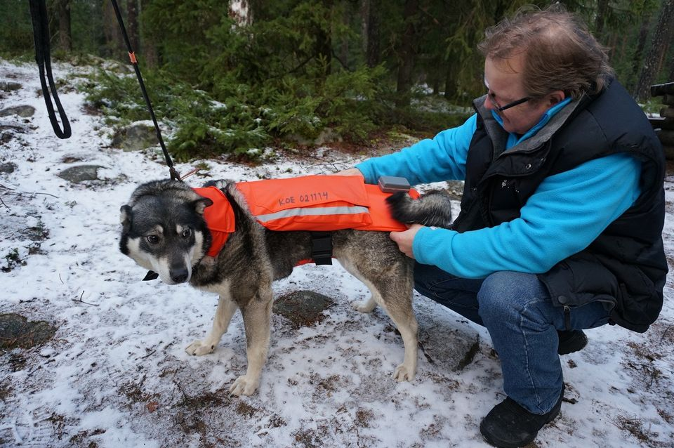 Jussi Aro and his dog Minka try out a 'chili vest' prototype. (Pertti Huotari / Yle)