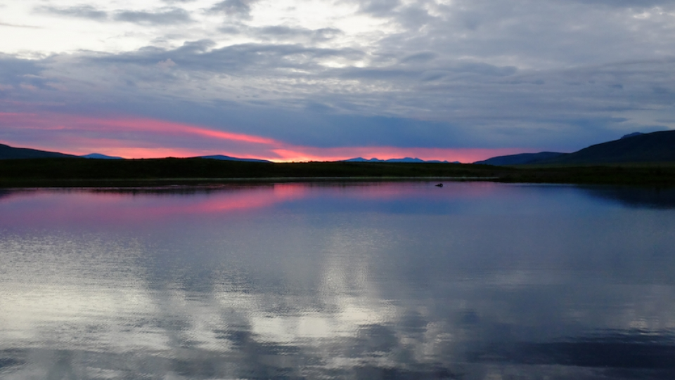 A moose swimming in the pink fluorescent rays of the 4am sunrise at Two Moose Lake in Yukon, Canada. (Mia Bennett)