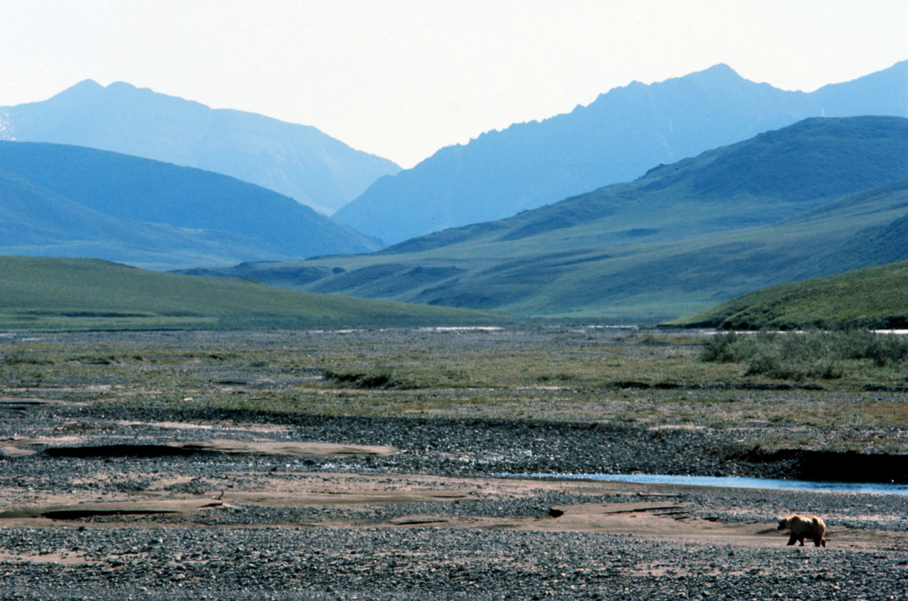 alaska-is-trying-to-slice-some-land-out-of-the-arctic-national-wildlife-refuge