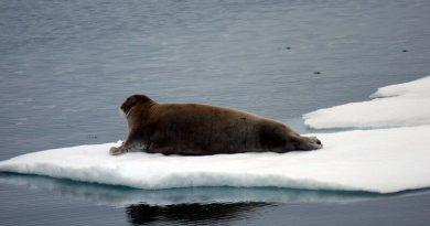 january-sea-ice-extent-record-low-barents-and-kara-seas