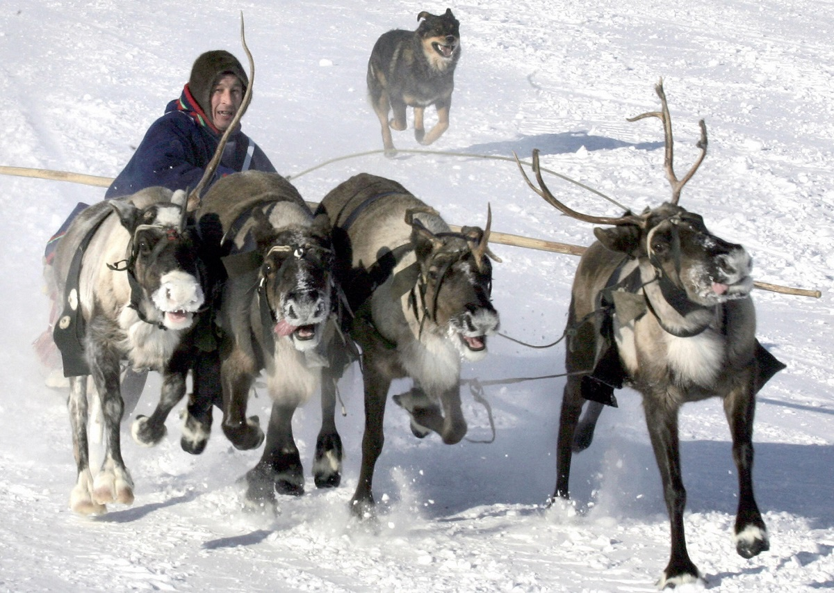 canadian-researchers-count-on-siberian-reindeer-herders-to-solve-archaeological-mystery-10