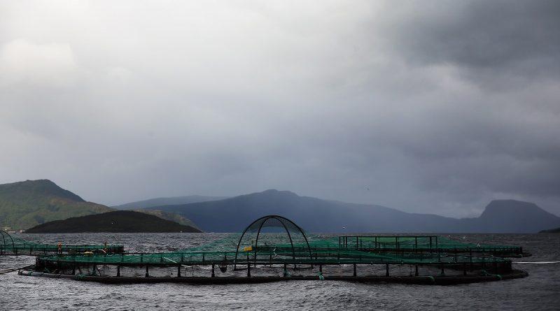 russian-salmon-farmers-buy-norwegian-smolt-company