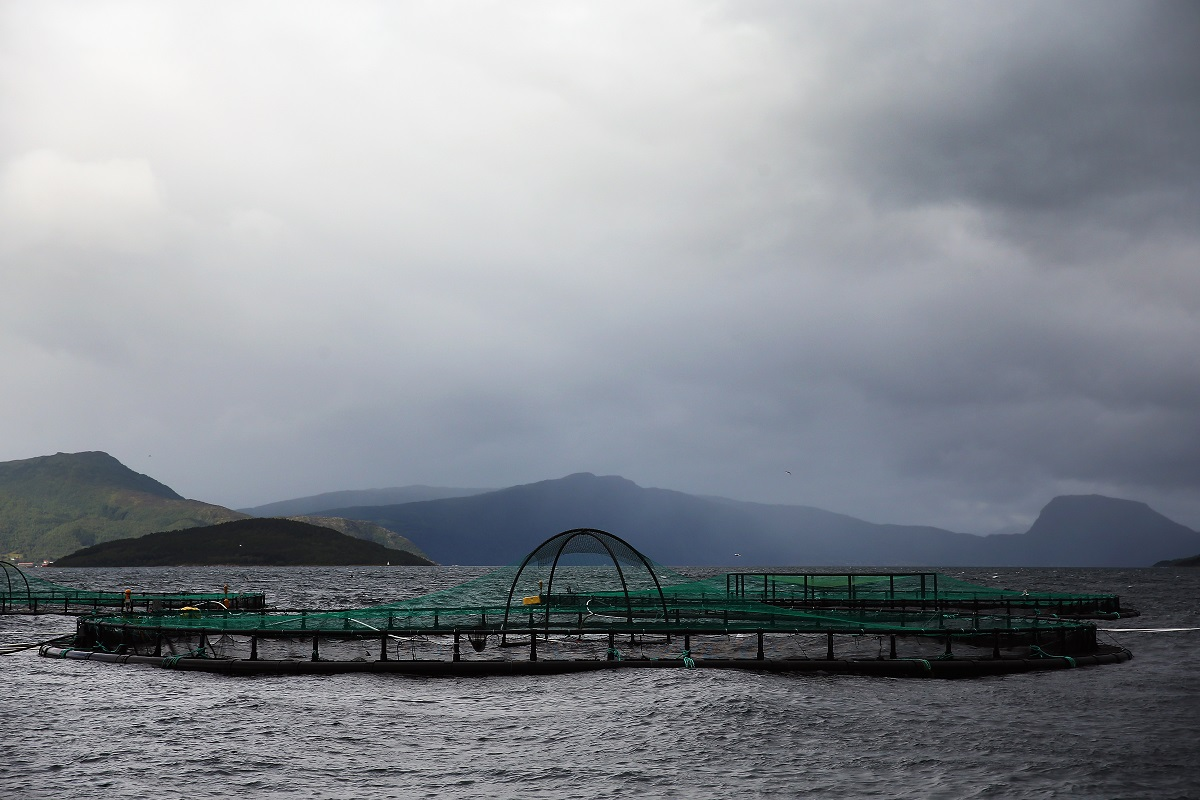 russian-salmon-farmers-buy-norwegian-smolt-company