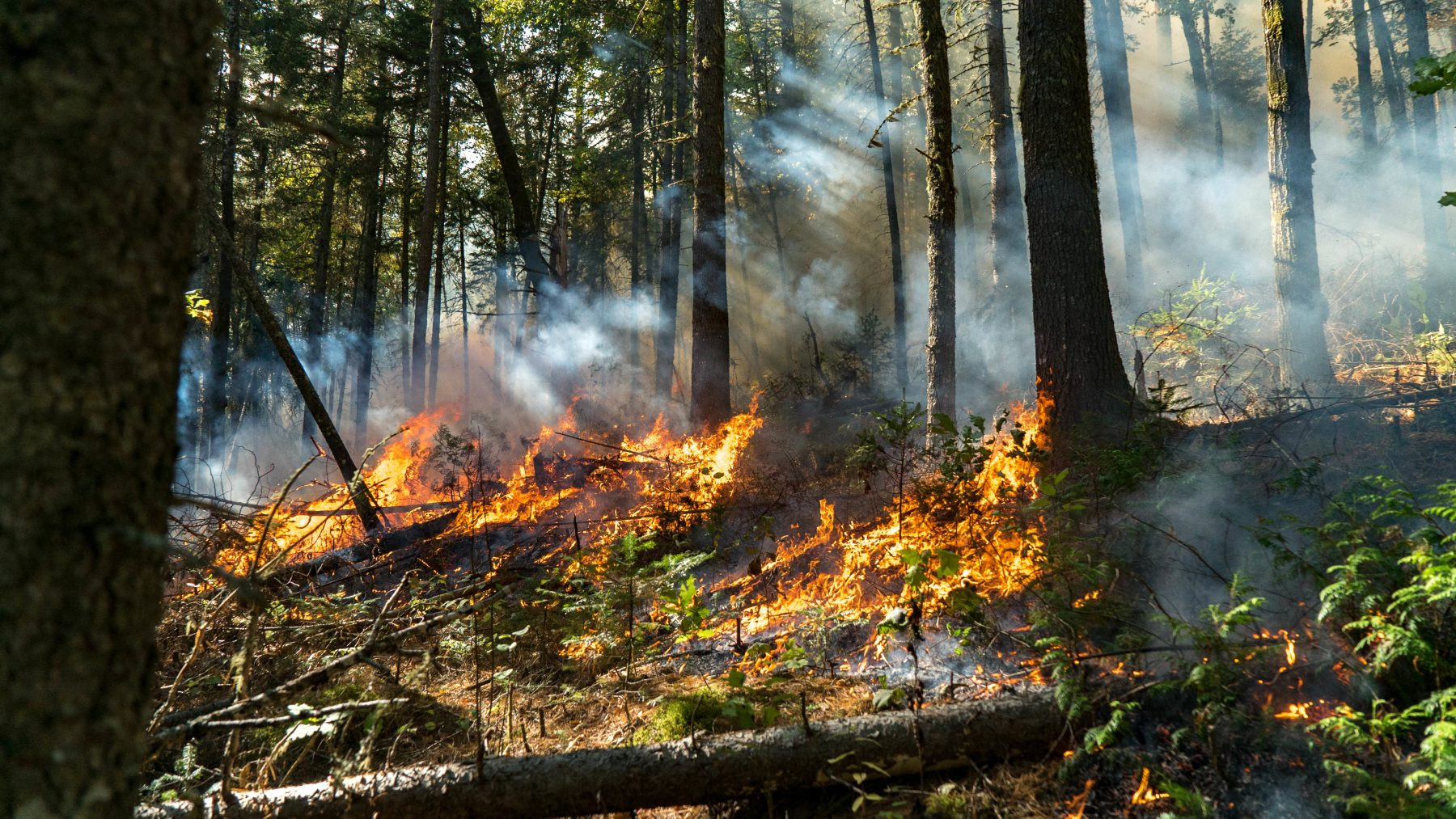 Sweden: Small fires break out due to dry conditions