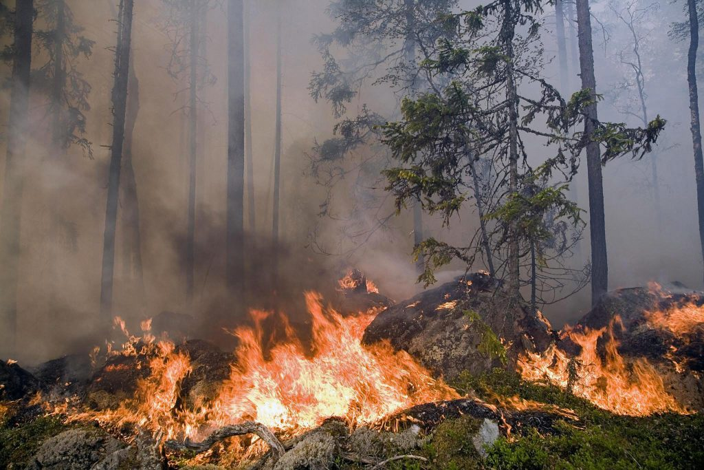 Most of Sweden's wildfires manmade and preventable – Eye on the Arctic