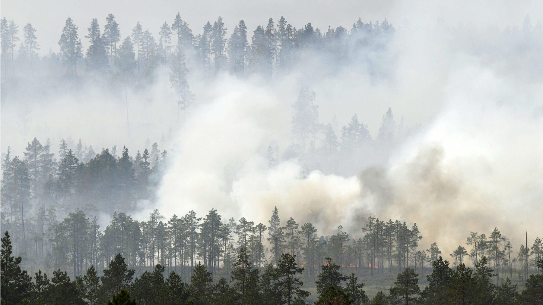 Swedish municipalities to cooperate in fighting future wildfires