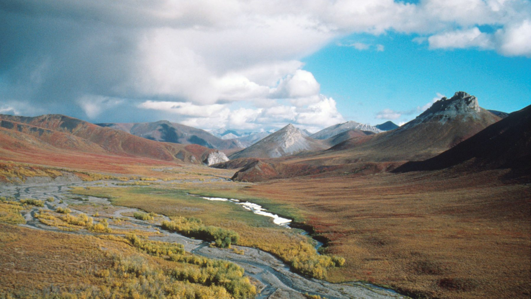 Democrats continue fight against drilling in Arctic wildlife refuge in U.S. Congress