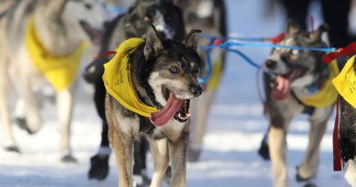Iditarod adds four new board members amid criticism