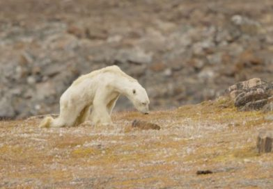 National Geographic polar bear apology proves colonialist attitudes towards Inuit remain, say northerners