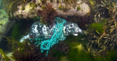 Lost fishing gear threatens marine life, says animal rights group