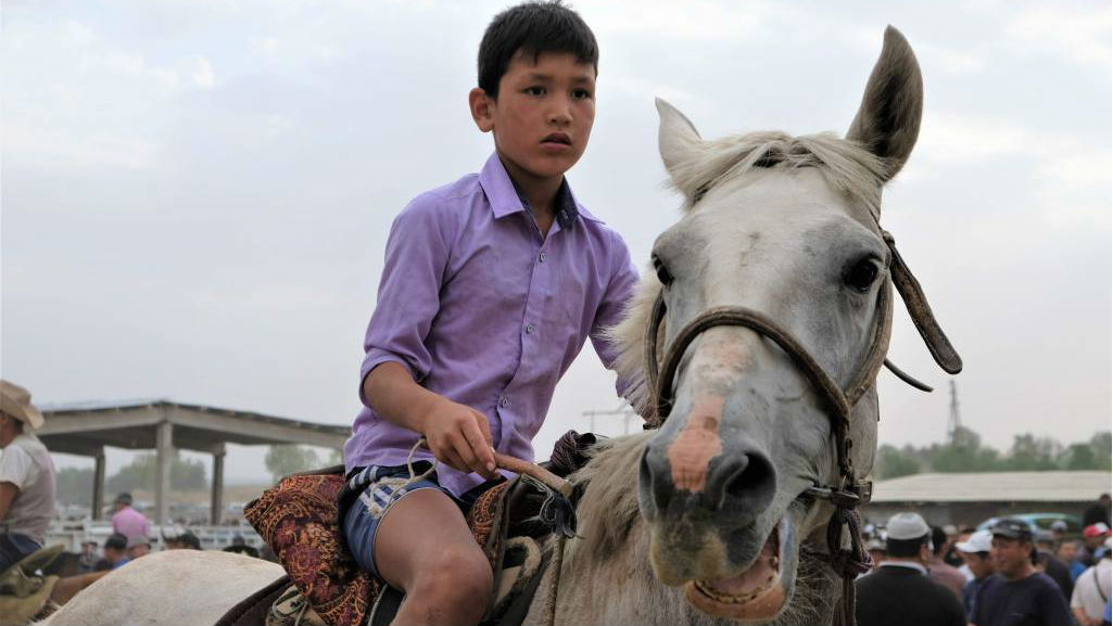 Horses for sale at the weekly animal market in Osh, Kyrgyzstan in the Fergana Valley. (Mia Bennett/Cryopolitics)