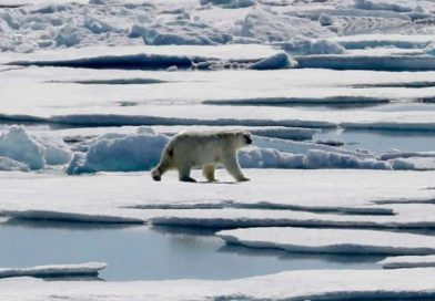 Conservation groups hope to educate Canadians with new Arctic marine atlas