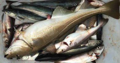 Cod moving further north as climate changes in Arctic Europe