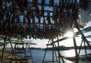 Increasing ocean acidification ushering era of uncertainty for Arctic, says report