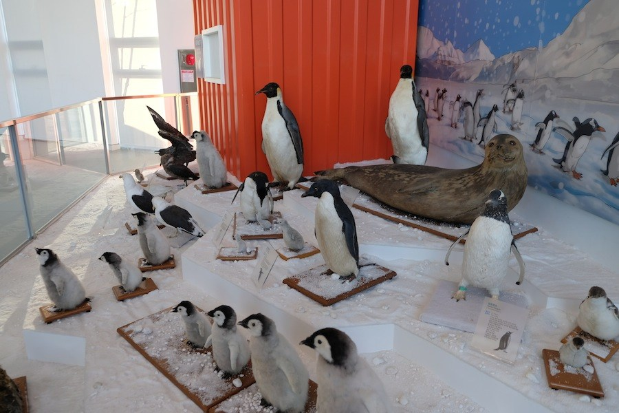 Penguins. (Mia Bennett/Cryopolitics)