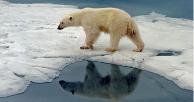 December sea ice levels in Arctic Europe at record low
