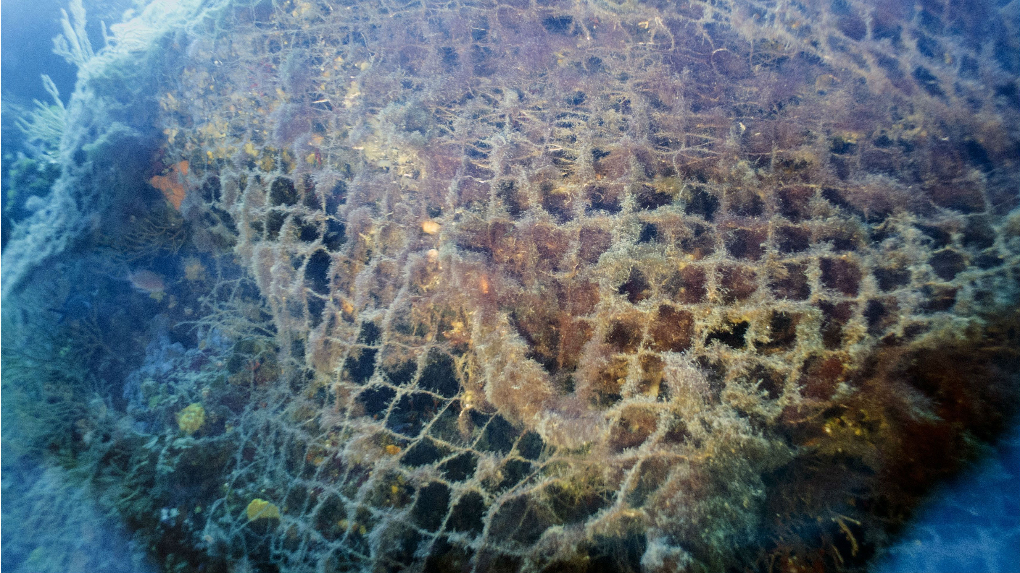 Environmentalists seek solutions to ghost net problem in Baltic Sea