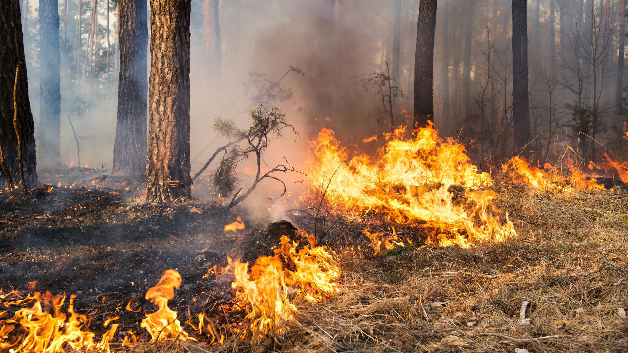 Finnish Fire