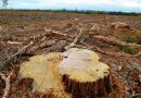 Most Finns would support restrictions on clear-cutting