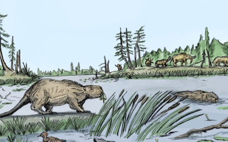 Why did giant beavers go extinct? It was their diet, researchers say