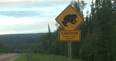 Government in Northern Canada encourages drivers to avoid squashing at-risk toad species