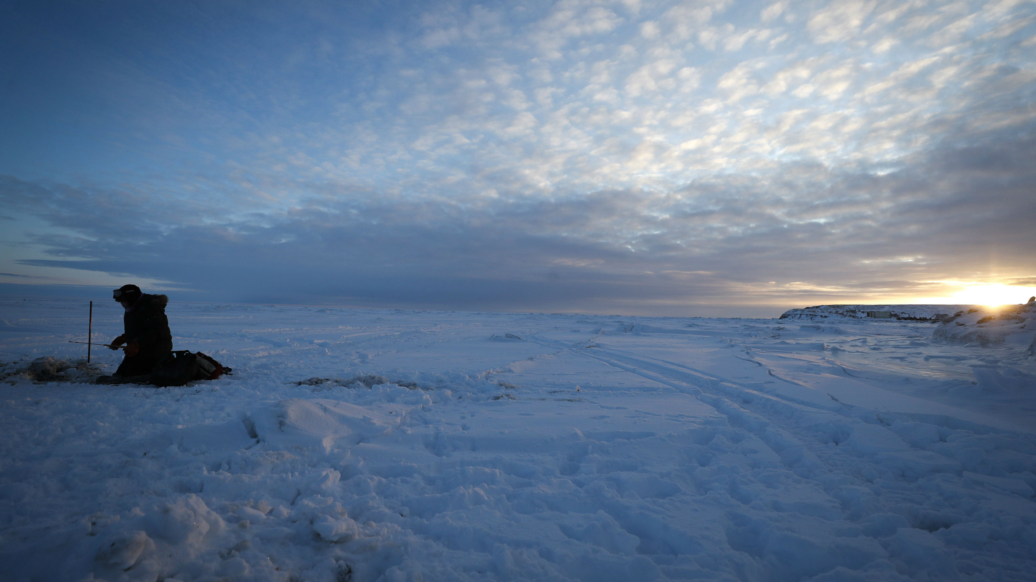 Scientists sound alarm on striking transformation of Bering and Chukchi ecosystems as ocean warms