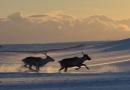 Arctic railway dream fades away as Sami herders signal 'veto'