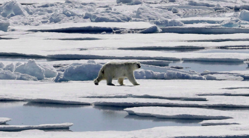 Arctic summer sea ice could be gone by 2035, new study forecasts