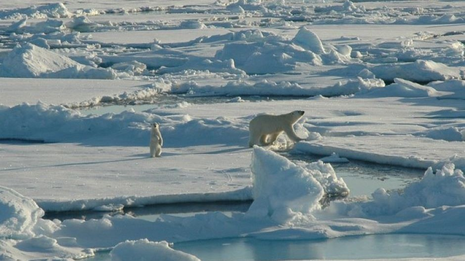 Alaska polar bear den disturbances part of 'death by a thousand cuts,' researcher says